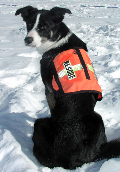 A Border as a Rescue Dog